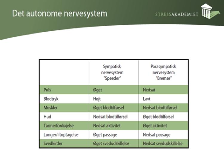 Hvad er stress - Det autonome nervesystem